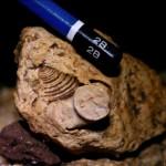 fosil-copy
