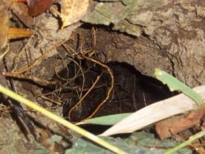 sumuran-cave